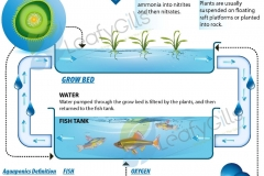 aquaponics-diagram-1web